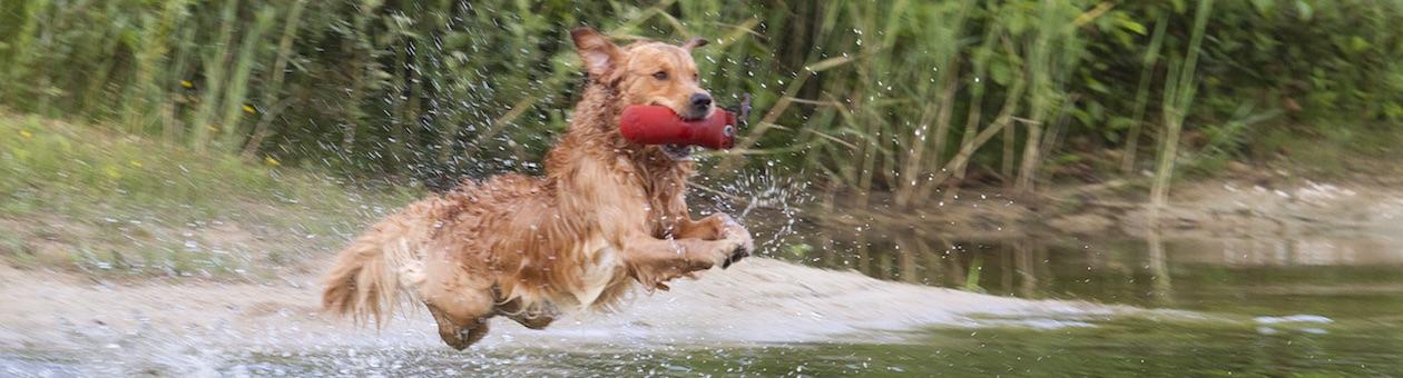 Jachthondencursus Apeldoorn